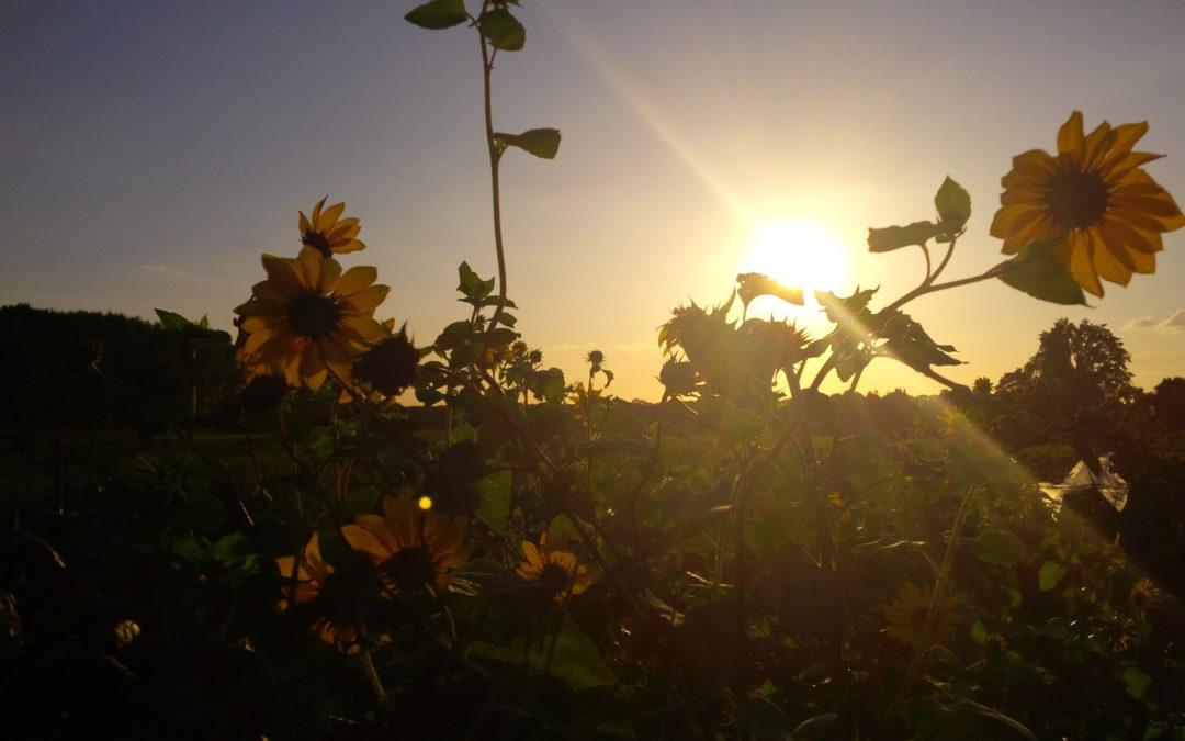 Klimakommissar Timmermanns will die Agrarreform so nicht akzeptieren